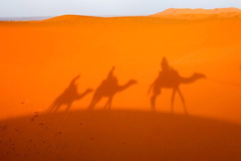 בעקבות שיקוי הנעורים הנבטי - משחק בריחה מדברי בחוות שירת המדבר