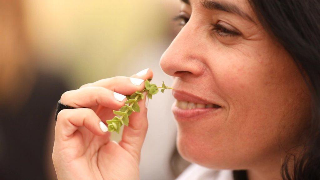 סיור חוויתי על צמחי מרפא בשירת המדבר