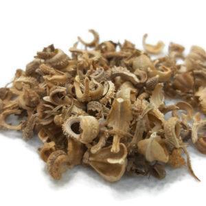 זרעי קלנדולה