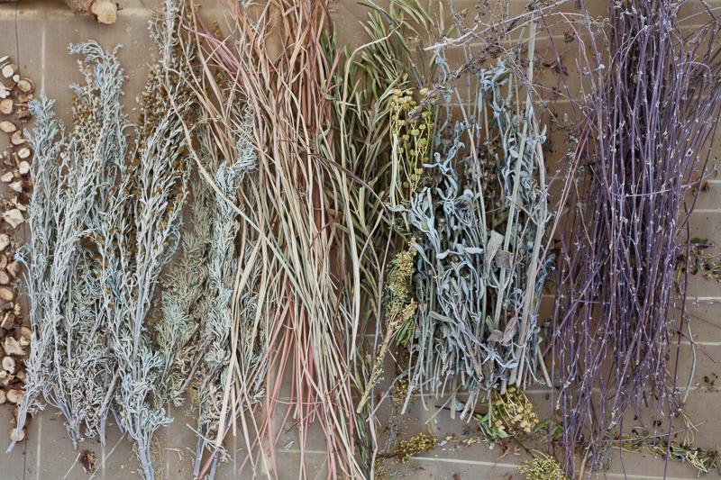 צמחים מיובשים להכנת חליטות