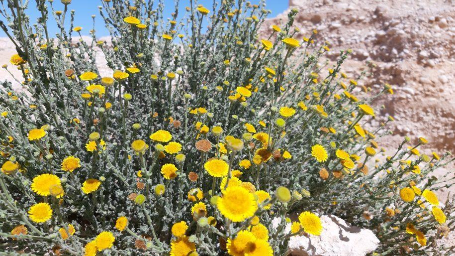 כוחות העל של צמחי המדבר